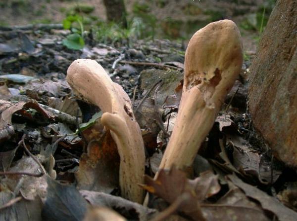 Nuovo significa da un fungo di unghia
